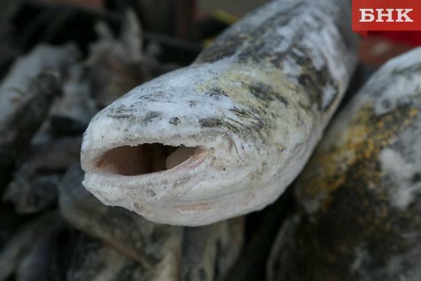В Коми завезли 22 тонны рыбы с мышьяком