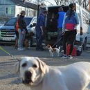 В Сыктывкаре временно закрыли семейный центр