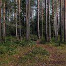 До конца года в Коми заработает нацпарк «Койгородский»